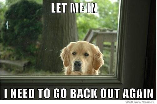 只有養狗的人才會遇到的18件莫名其妙的事情。#1每天都遇到...