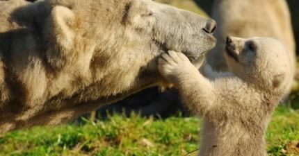 21隻動物媽媽讓你看到當母親的偉大。