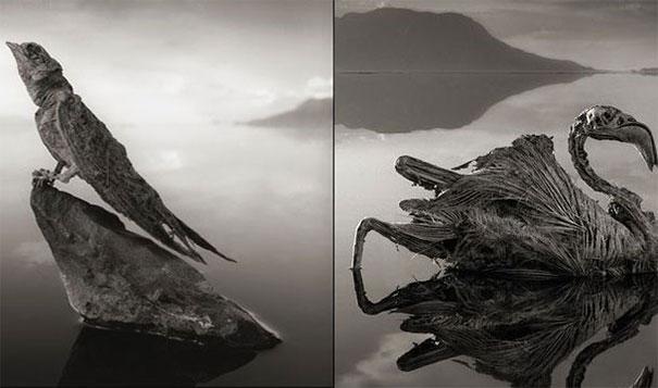 21. 鈣化湖:納特龍湖(Lake Natron)會將動物的屍體鈣化成木乃伊。