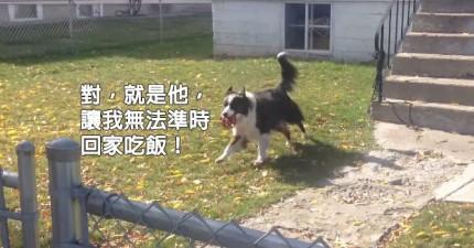 你不會想要走過這隻在柵欄後面的天才狗兒,因為他有一個方法可以讓你無法停止跟他玩撿球遊戲。
