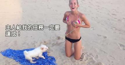 「狗兒幹得好!」看看這隻一直想要把女生比基尼扯掉的機伶小狗。