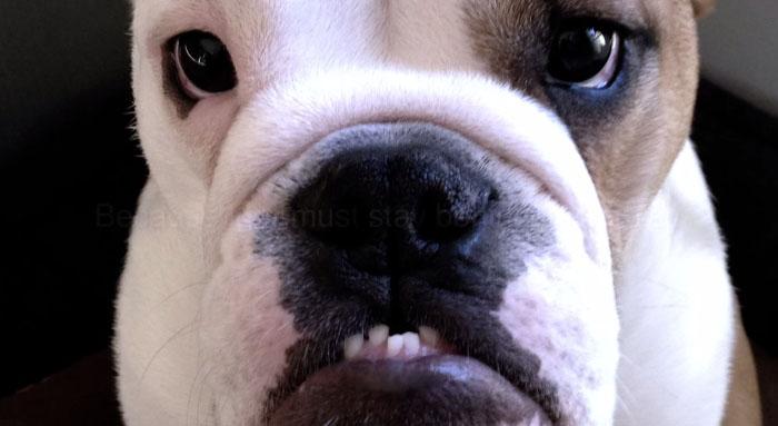 這個愛狗老爸瘋了!一家人在出國前,為狗狗做的事情簡直太瘋狂了!