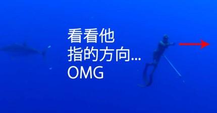 他們只是在海裡拍攝一些海洋生態,但後面忽然出現一條超級大型的...
