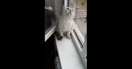 如果我有這隻貓咪一半的專注力,我之前上課的時候就一定每科滿分!