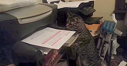 這隻貓咪跟影印機印出的紙有很深的仇恨。看看他對剛印出的紙做的事情就知道了。