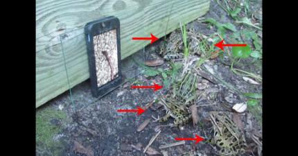 青蛙看到iPhone上播放蚯蚓影片時的反應太驚人了!