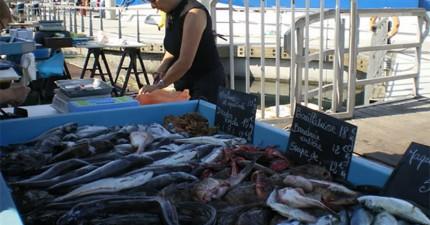 在這個魚販攤子總會有一隻海獅,安靜地排隊買魚吃。