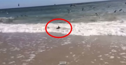 所有人的惡夢在這座海灘上發生了。難怪有人不敢去海灘游泳!