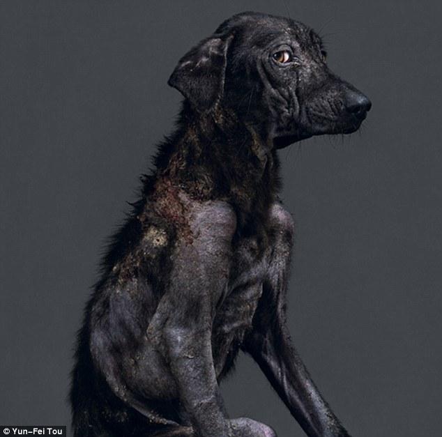 這7隻狗都有一個會讓你很震驚的共同點。為什麼我們還讓這麼不合理的事情繼續?