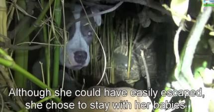 當在拯救這隻流浪狗時,他們在她藏身的樹叢裡發現到一個最溫馨的大驚喜。