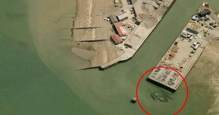 15米寬的「哥吉拉級巨大螃蟹」在英國碼頭被拍攝到。這是個重大發現還是只是某人的惡作劇?