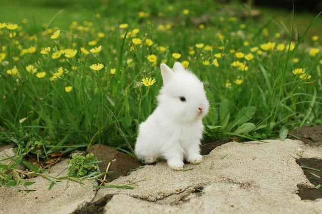 28隻最有療癒神力的神萌小兔子。看完後天空出現了彩虹~