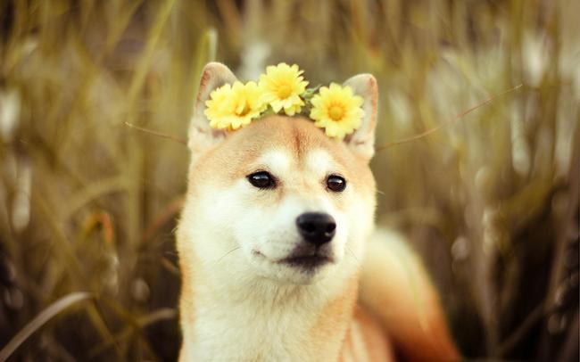 這臉配上花環,你看起來好尊貴啊!(跪)