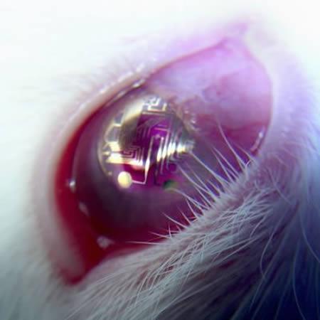 15種世界上最驚奇的隱形眼鏡。戴了之後根本就變身為變種人啊!