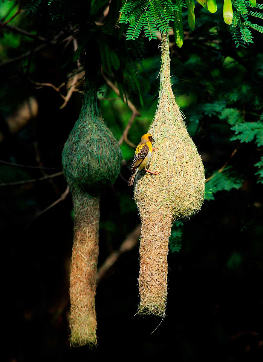 animal-architecture-nests-8-2
