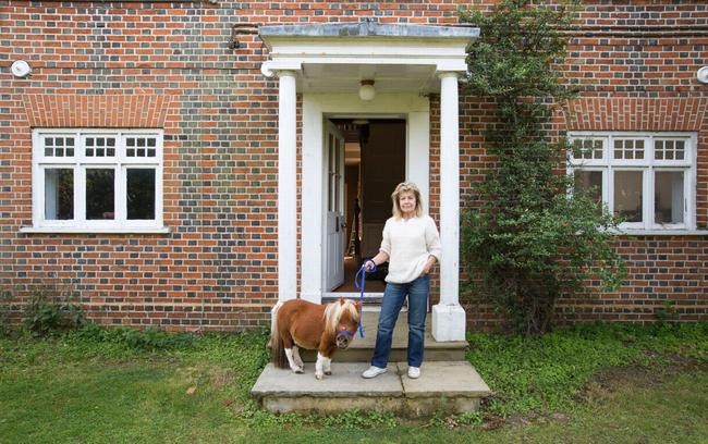 Acer跟他主人一起住在英國艾塞克斯(Essex)的迷你馬園。