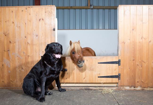 他最好的朋友,是家裡的狗狗Demon,這隻狗狗甚至還比Acer還要高呢!