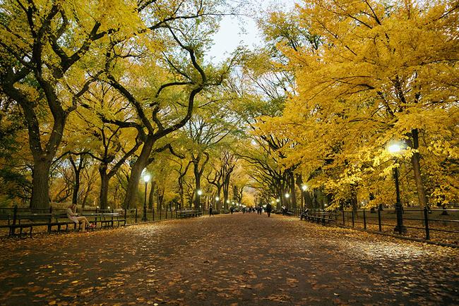 13張之前之後照證明秋天就是最美的季節!