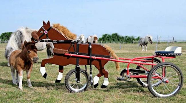 這匹小馬天生就有一個缺陷,但這也是為什麼他可愛到炸掉!