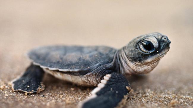小海龟,你一脸很严肃啊!