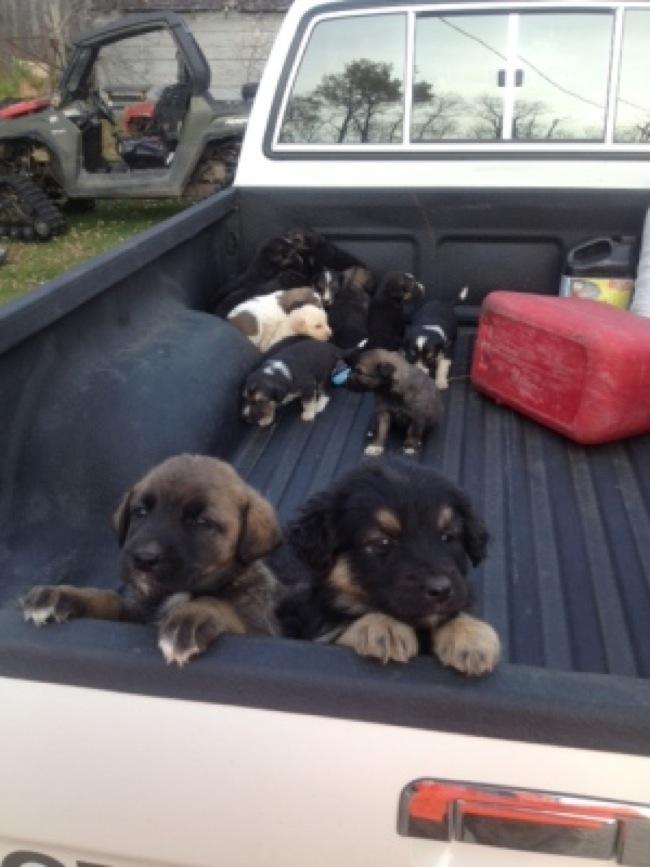 一箱20隻幾週大的小狗被丟到天寒地凍的野外等死,但神奇的緣份卻讓他們全都活了下來。