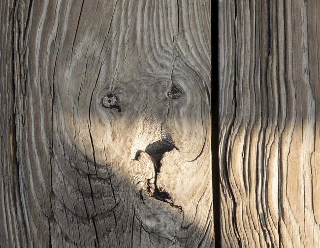 11.) 這是一隻被封印在木頭裡的獅子吧?表情真委屈。
