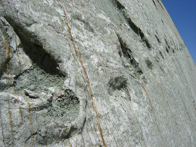 从这些足迹当中,你也可以推测出,恐龙是多么大型的生物。