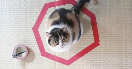終於有人破解貓咪了!用這3個簡單步驟就可以輕鬆捕獲愛亂跑的貓咪!