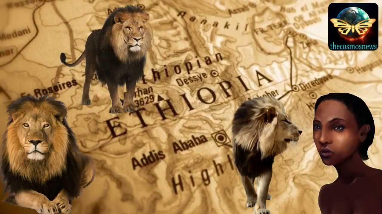 12歲的女孩被一群男人綁架逼婚,然後3隻獅子出現,扭轉了整個局勢。