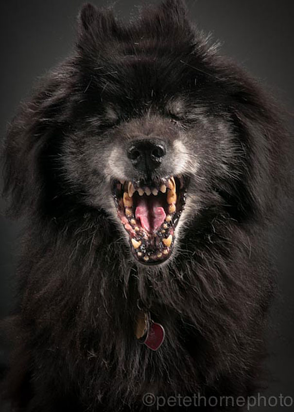 大家都愛看可愛的小狗,但這些一生為人類奉獻的忠誠老狗更能令我感動!