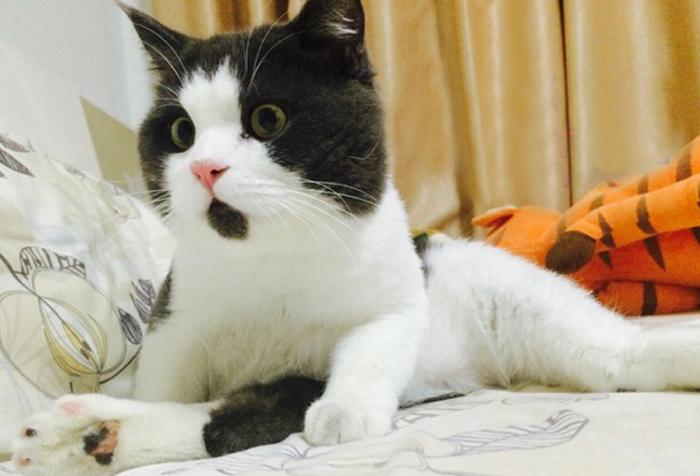 「什麼OMG?!」這隻爆萌貓咪的臉上24小時就是那樣的表情。