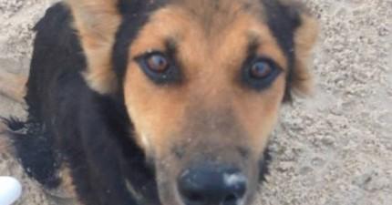 她在泰國的海灘上找到這隻半身不遂的可憐小狗,結果她當下決定做一件很棒的事情!