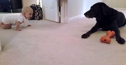 小寶寶跟狗狗學習如何爬行。最後狗狗給她的獎勵真的太可愛了!