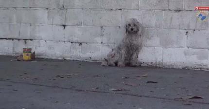 這隻流浪狗因車禍受傷又惶恐,但她的反應讓動物救援員忍不住哽咽掉淚。