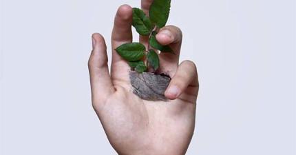 你看到的真的不是電腦修圖。這名藝術家真的在自己的手掌心上種植物!