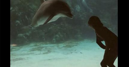她只不過心血來潮表演了體操,沒想到引起海豚驚奇的反應。