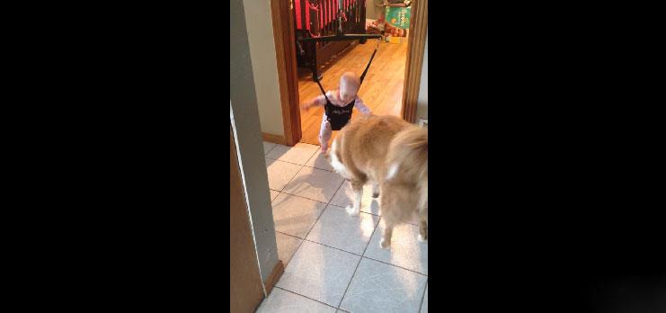 狗狗發現到小寶寶不會跳,因此開始用最可愛的方式教他。