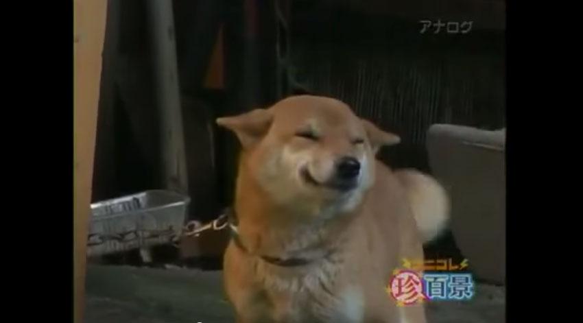 狗狗開心的笑