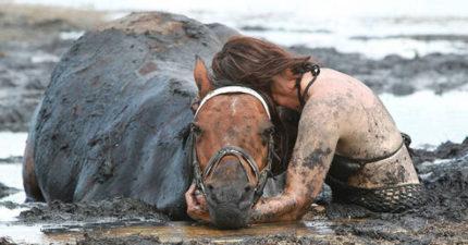 她的愛馬突然因漲潮深陷泥沼快死,「不離不棄」結果讓人哭慘。