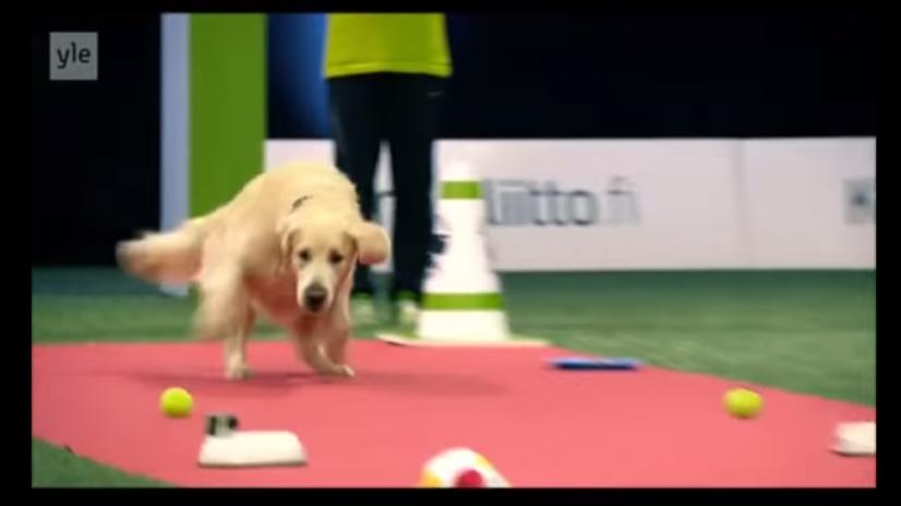 黃金獵犬比賽