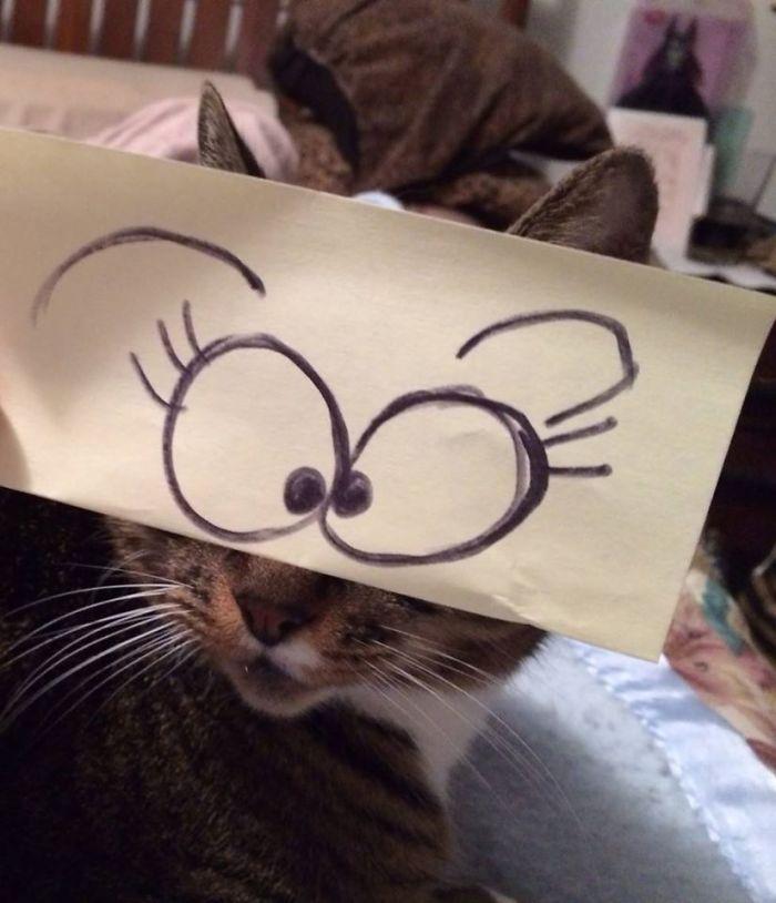 在日本興起了一個給貓咪漫畫眼睛的風潮,已經把我給笑翻了!