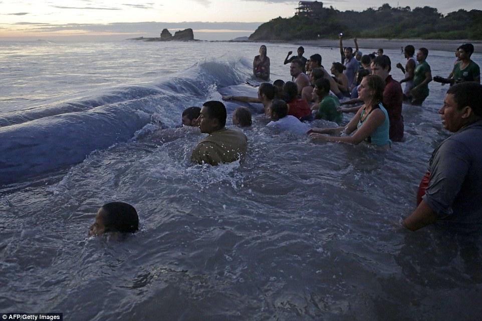 3萬公斤重的鯨魚擱淺在海灘上。所有民眾合力為他做的事情讓我對世界感到希望!