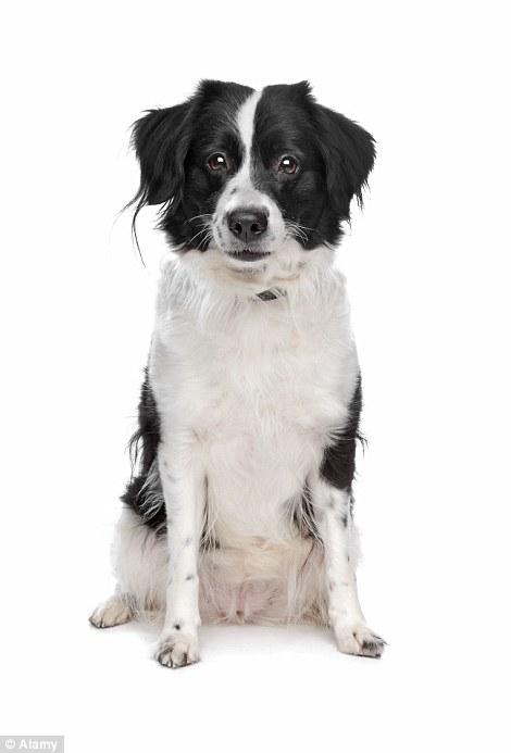 根據研究,什麼狗種才是「人類最好的朋友」?哪種狗又是評分最低的呢?