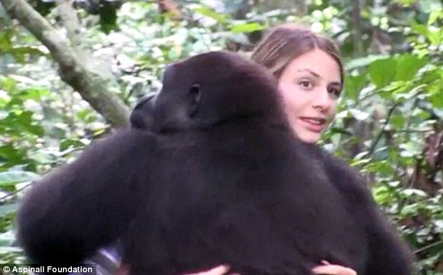 現年25歲的Tansy,是一位珠寶設計師,她和她的爸爸一起進入非洲加彭 (Gabon) 的熱帶雨林,這對父女用一艘小船航進了叢林深處,這像是個不可能的任務,要尋找大猩猩Djalta和另外一隻也曾經住在動物園的猩猩Bims。
