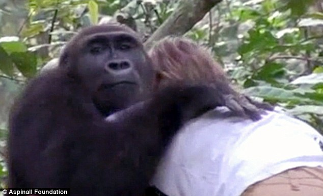 Tansy還記得小時候跟姊妹Clary一起跟猩猩玩的景象,她們會草皮上跟Djalta和Bims玩耍,也認為跟他們就是一家人。但在他們要出發去叢林之前,Tansy是有點不安的,畢竟也已經太多年沒有見到這兩隻大猩猩,不知道他們是否還記得,也或許他們在叢林的生活讓他們變得更強悍、甚至是有點危險了。