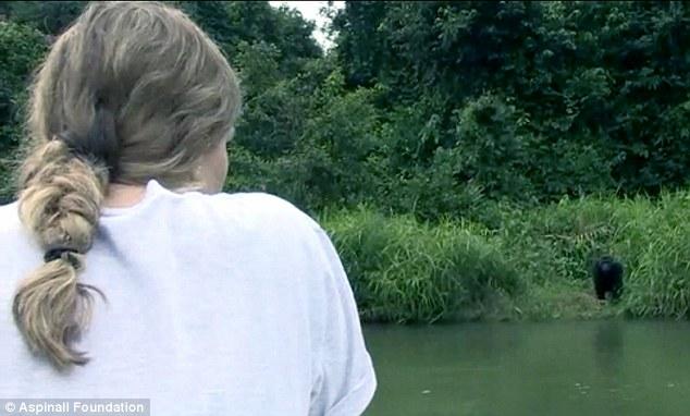在2002年,Djalta回到了野外,至今,Tansy和這隻大猩猩也已經有12年不見了。不過就在最近,他們又再度重逢了。