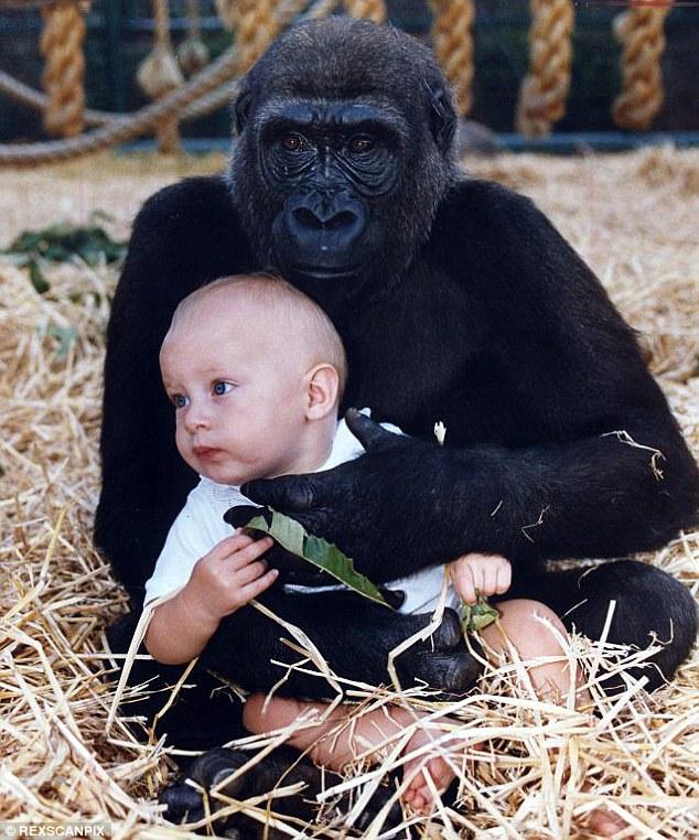 當時,身為環保人士的爸爸Damian Aspinall就讓她跟大猩猩一起玩,並拍下了照片。雖然照片造成了很大的爭議性,但這個體驗,似乎也在自信和勇氣上,給年幼的Tansy上了一課。