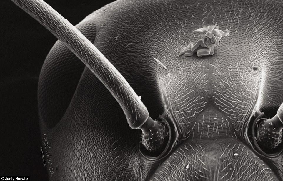 這些奈米雕塑小到連螞蟻都覺得小。一個就要花10個月完成,但最後卻遇到了悲慘的命運。