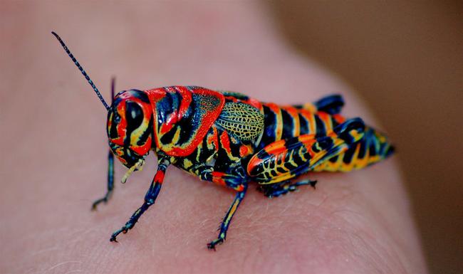 你一定會覺得這些色彩斑斕的動物是PS過的,但這其實是大自然給我們最驚艷的禮物!