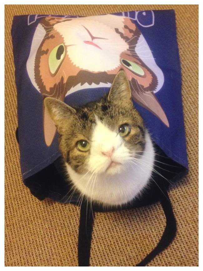 很多人可能會覺得這隻畸形貓長得很奇怪,但我覺得他是我看過最可愛的!